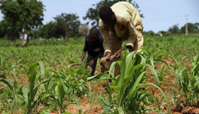 FG facing reality of futile border closure on soaring food prices, low agric output