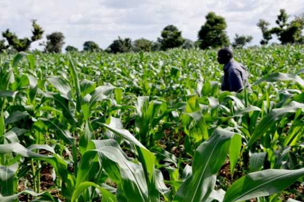 Agricultural output to decline 47.5% across major commodities post COVID-19