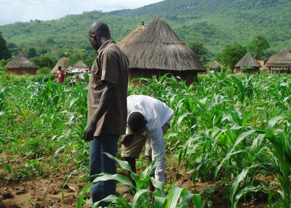 COVID-19: Leaders of Nigerian farmers warn of impending food crisis