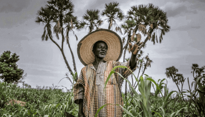 A group of over 100 investors owed by Abuja-based digital agro-investment firm, Thrive Agric, has asked the platform to pay nearly N50 million