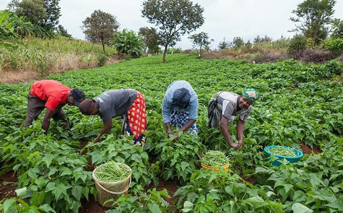 The African farmers'stories: Agricultural technology for greater productivity