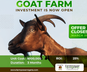 The goat farming business remains untapped, farmpowernigeria is leveraging on this to expand the market and of cos, make profit