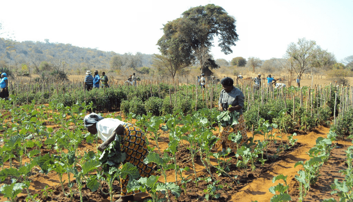 IFAD partners Babban Gona to boost private funding for smallholder farmers